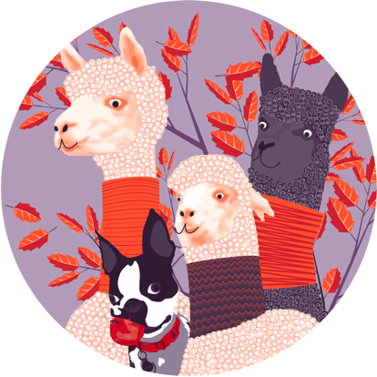 bob and alpaca